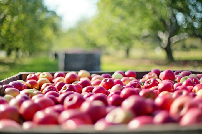 Taste Washington Day, October 2nd:   La Center School District shares their experience with local farms