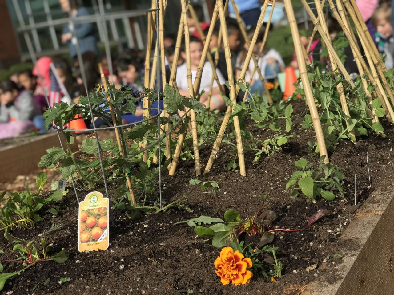 Washington Elementary starts a school garden and brings a community together